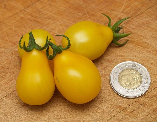 Yellow Pear Heirloom Tomatoes