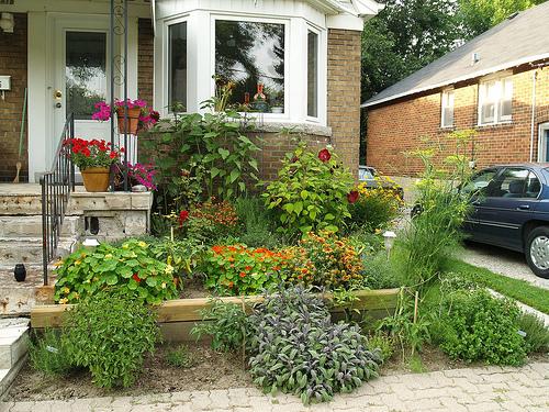 My Garden: Perennials and Herbs
