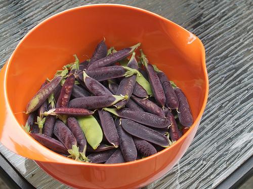 Capuchijners Peas