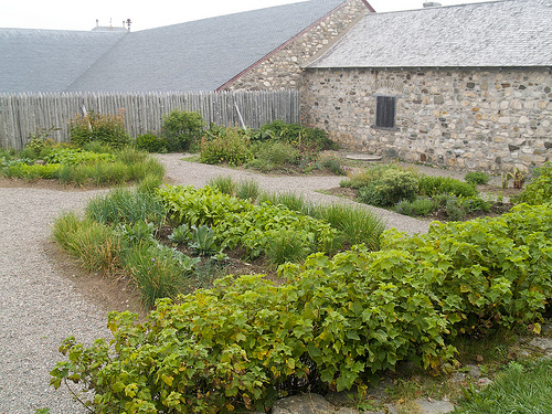 Fortress of Louisbourg potager