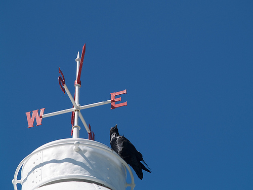 Lobster Cove lighthouse, and a raven