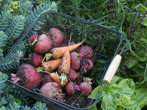 Last of the beets and some carrots