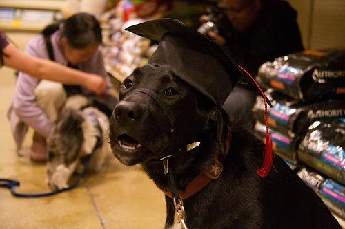 Luna - Graduation!
