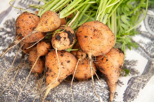Carrots - Tonda di Parigi
