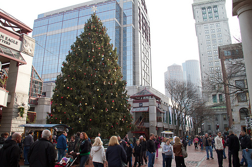 Enormous Christmas Tree, gifted from Halifax