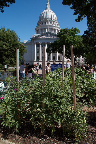 Community veg garden in the square