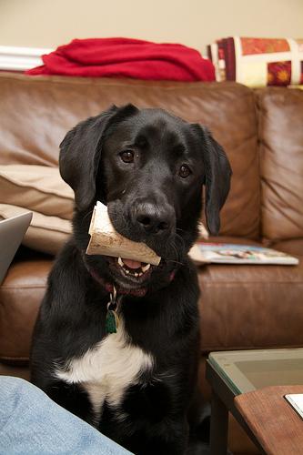 Bone?