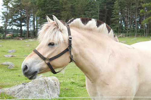 And of coures, a Fjord Horse, with an awesome mane-do