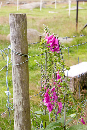 Pretty fence post at the Jærmuseet