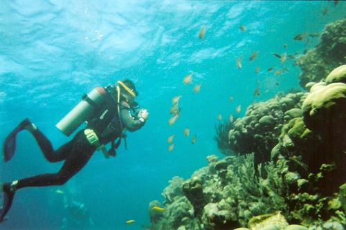 Dad Diving